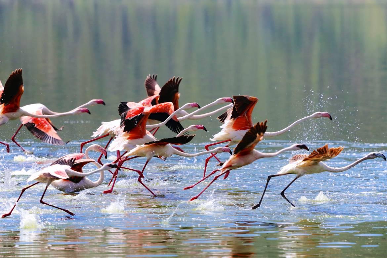 Running-Flamingoes_1200.jpg