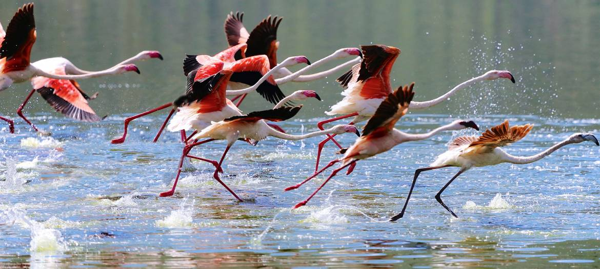 flamingoes.jpg