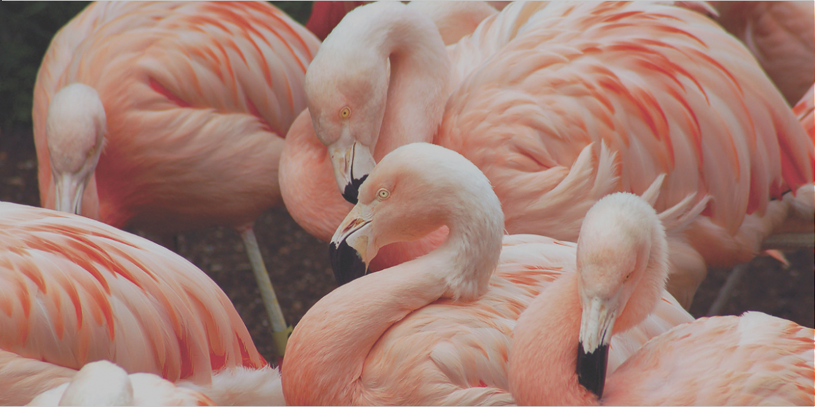 4-Graceful-Flamingo.png